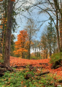 orange_autumn_trees_216859